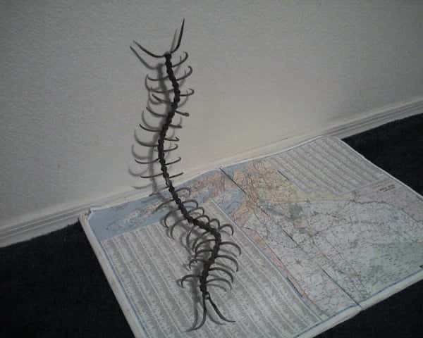 Centipede Welding Projects for Beginners